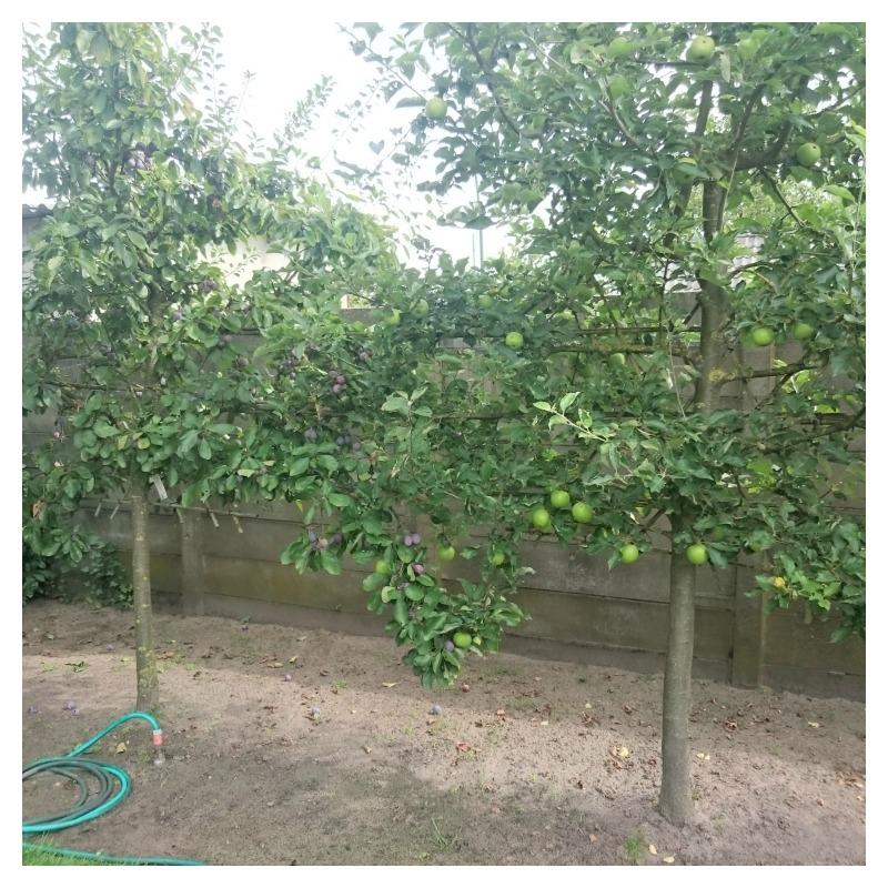 pruimen appels