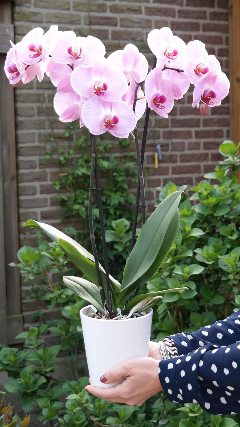 moederdag cadeau pakket orchidee